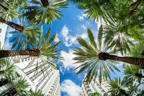 A stock photo of palm trees and buildings in the Brickell neighborhood of downtown, Miami, Florida.